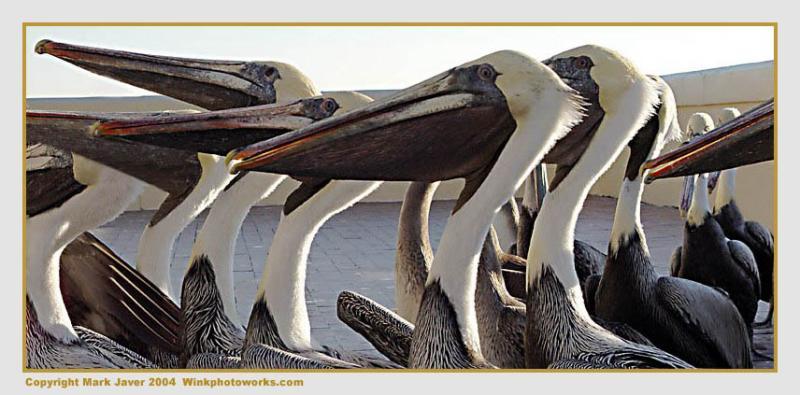 <b>Pelican Unemployment LIne</b><br>by Markjay
