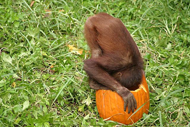 <b>I Just LOVE Halloween</b><br>by Markjay