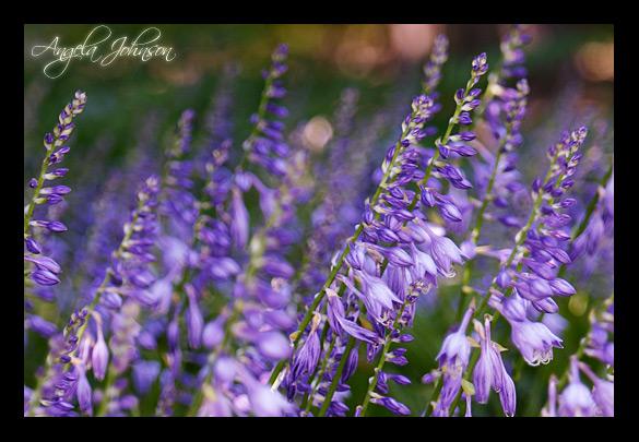<b>Purple Pattern</b> <BR> <i>by Angela Johnson</i>