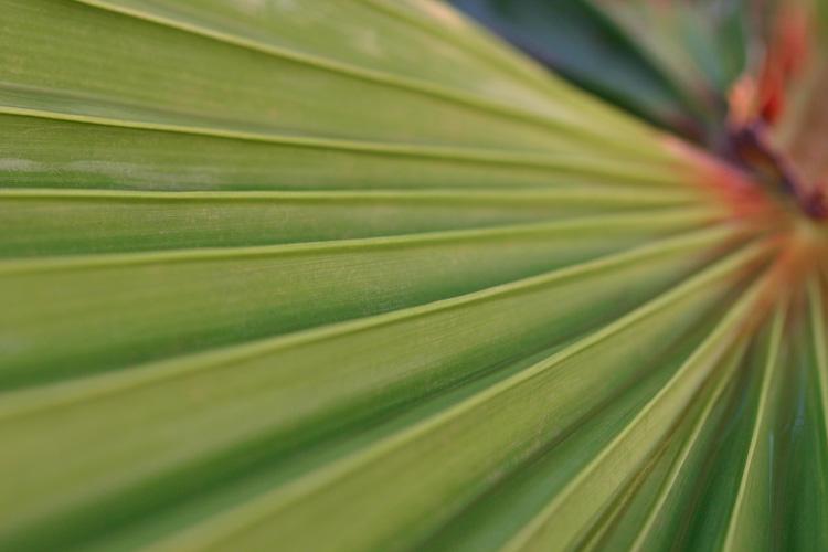 Palm (*)