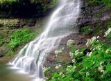 Ampitheater Falls & Black Cohosh