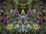 Miscellaneous woodland wildflower scene