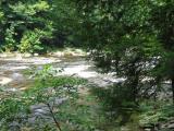 Loyalsock Creek