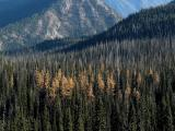 Turning of the Larches
