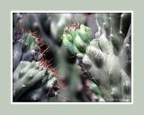 Prickly Situation 1