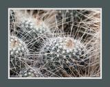 Prickly Situation 2