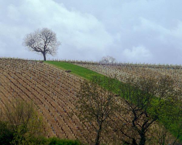 Sancerre vinyard