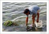 Seaweed fisherman!