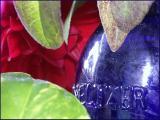 Plants and an antique Bromo Seltzer bottle