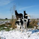 Joop's Dog Log - Sunday Feb 29