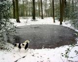 Joop's Dog Log - Monday Mar 01