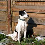 Joop's Dog Log - Wednesday Mar 03
