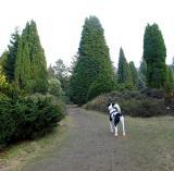 Joop's Dog Log - Thursday Mar 04