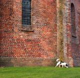 Joop's Dog Log - Saturday Mar 06