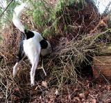 Joop's Dog Log - Monday Mar 08