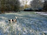 Joop's Dog Log - Wednesday Mar 10