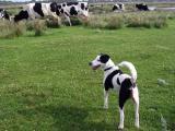 Joop's Dog Log - June 21