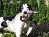 Joop's Dog Log - June 22