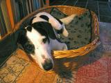 Joop's Dog Log - June 23
