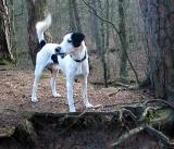 Joop's Dog Log - Friday Jan 09