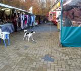 Joop's Dog Log - Thursday Jan 08