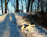Joop's Dog Log - Sunday Jan 04