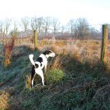 Joop's Dog Log - Thursday Jan 01