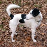 Joop's Dog Log - Thursday Mar 11
