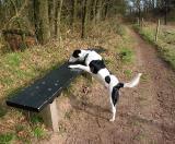 Joop's Dog Log - Saturday Mar 13