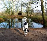 Joop's Dog Log - Monday Mar 15