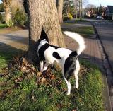 Joop's Dog Log - Wednesday Mar 17