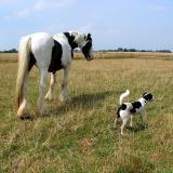 Joop's Dog Log - Aug 04