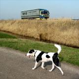Joop's Dog Log - Thursday Mar 18
