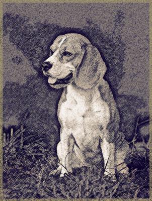 beagle-169