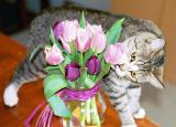 Sissy attacks Tulips