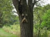 TreeMan1.jpg