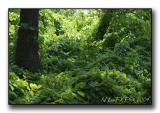 Green Jungle.jpg