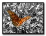 Wings in Motion.jpg