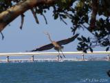 Blue-Heron-Velvia.jpg