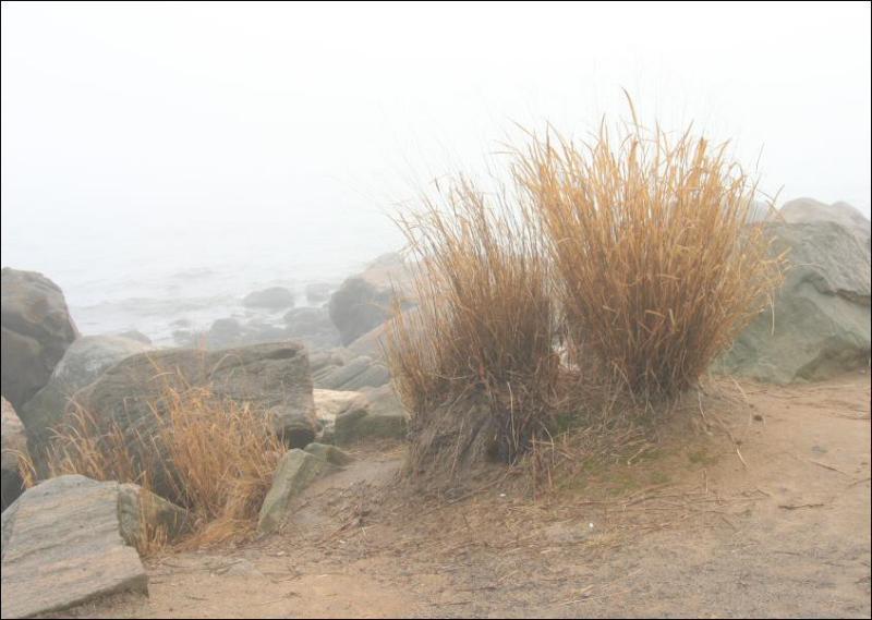 Grasses in the Rocks