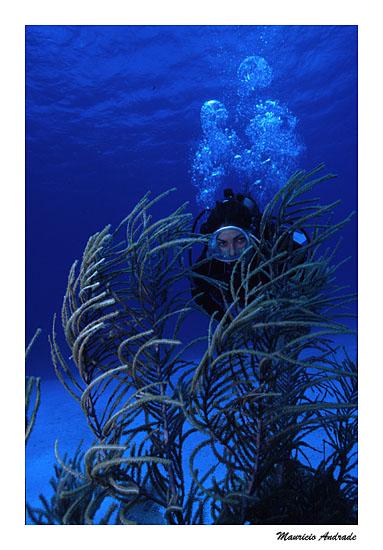 Helô e coral rabo de macaco
