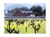 Mustard in the Vineyards