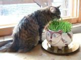 Wanda  has a funny gras bowl.