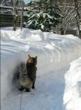Lumipolulla..