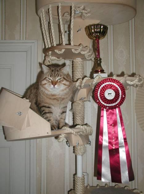 CEdi oli Best in Show Riiassa vähän ennen synttäriään.