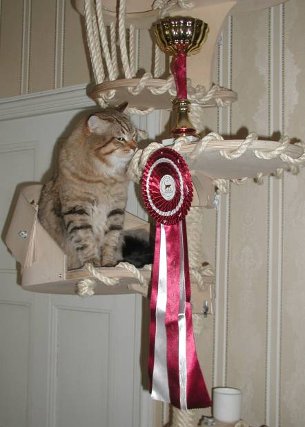 WOW did  I get this? Cedi and his BIS rosette and trophy!