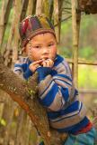 Up a tree - Lao Cai