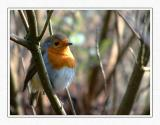 Robin, Stourhead