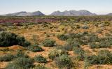 Namaqualand, Sth Africa, 1997