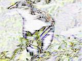 Crow art.jpg(340)